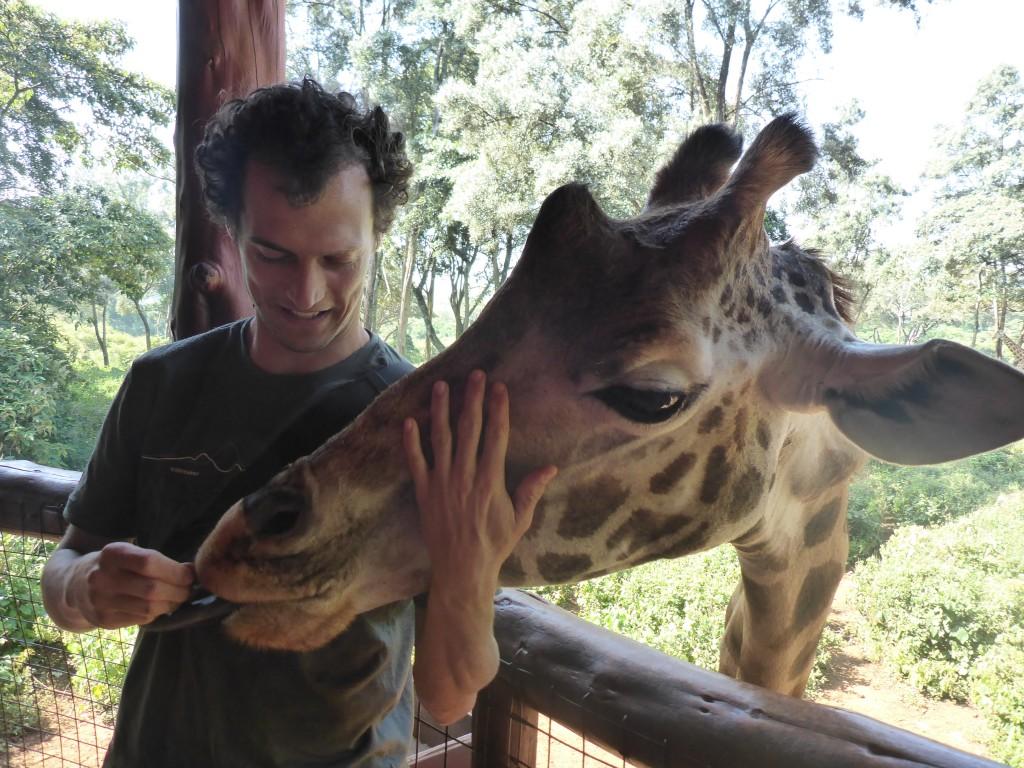 Girafe nourrie = girafe happy!